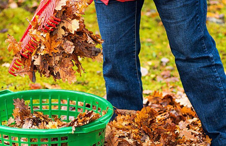 Pflege Rasen
